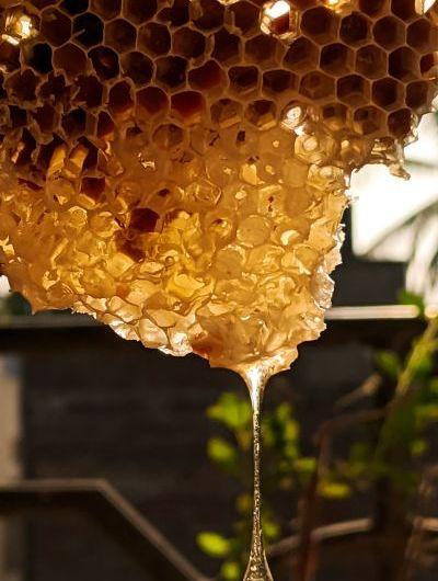 Honig Wabe Bienen